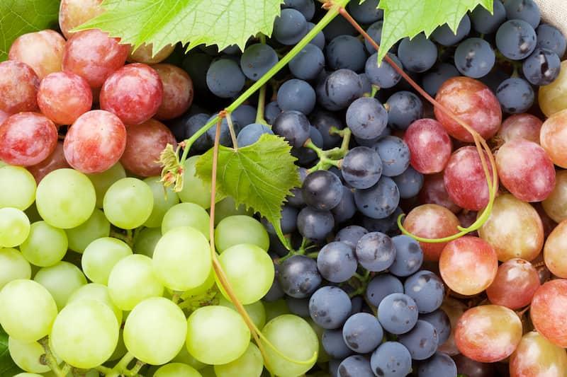 Uvas contienen taninos